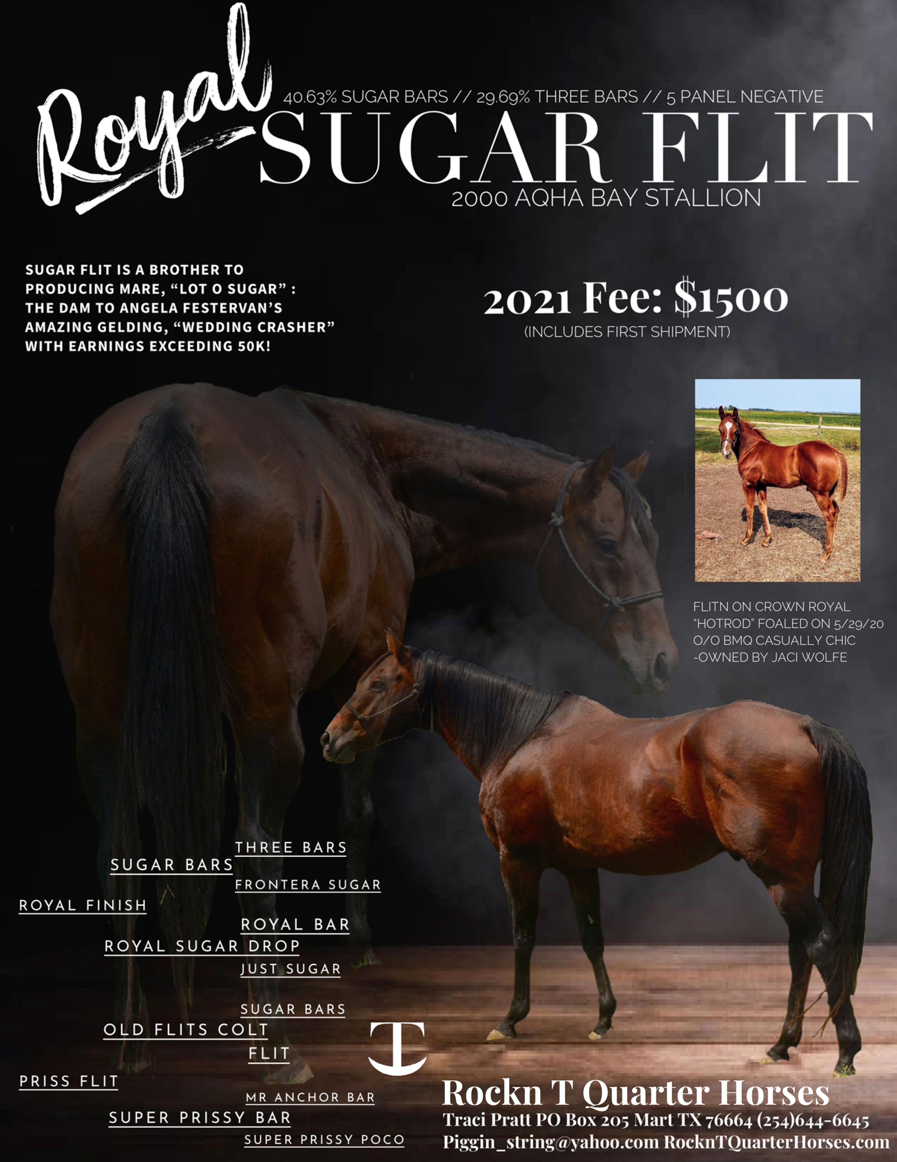 Royal Sugar Flit