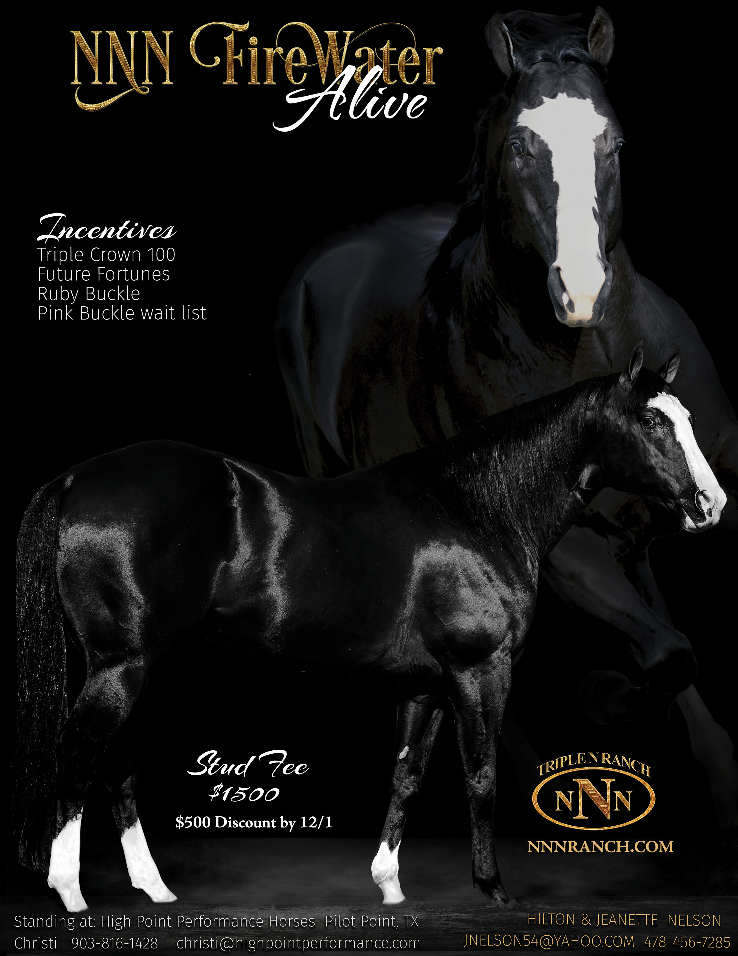 Barrel Racing Stallion NNN Firewater Alive
